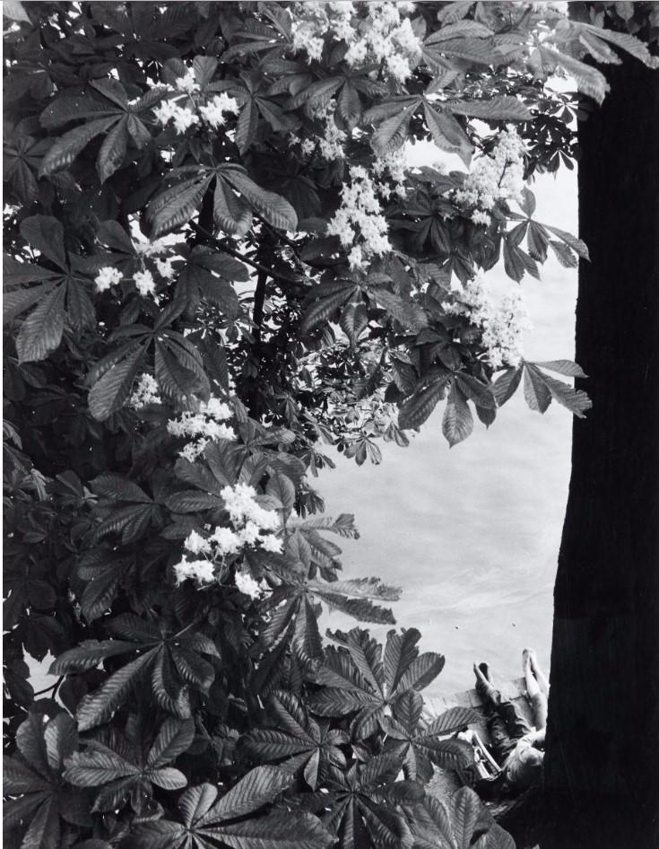 1953. Набережная Тюильри