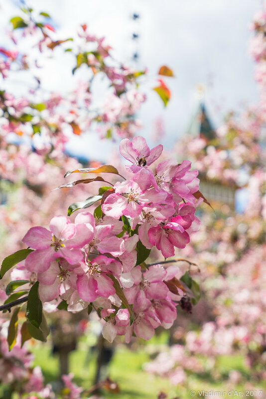 Коломенское в цветах и ароматах
