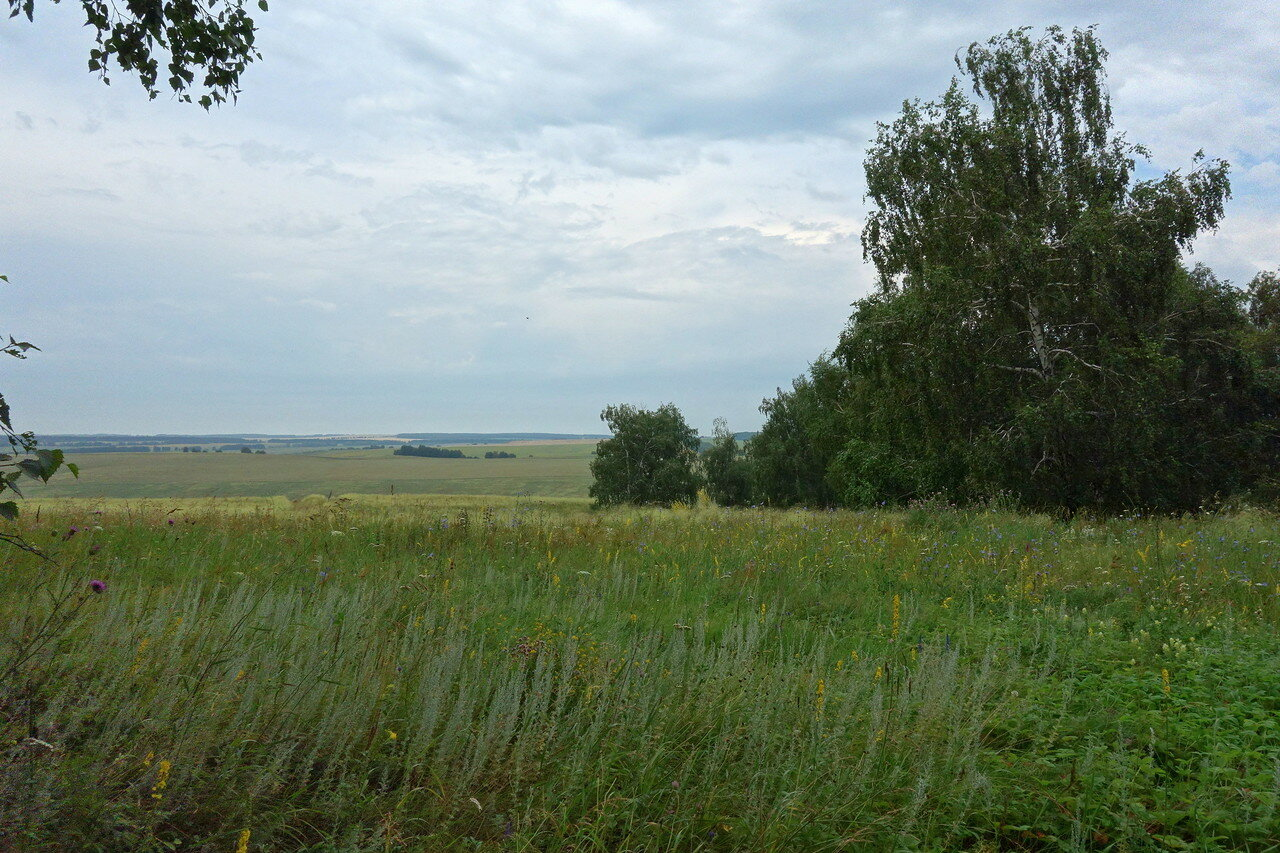 полынь и земляника луговая