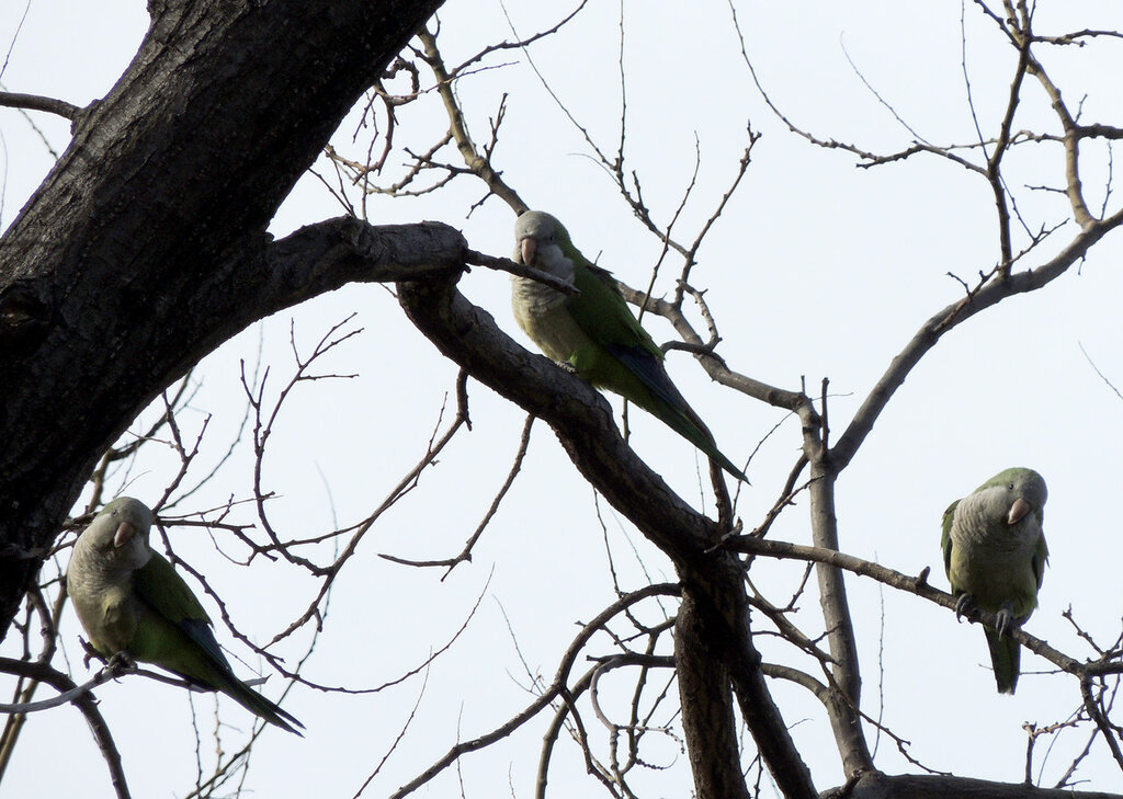 DSCN5843 попугаи 1.jpg