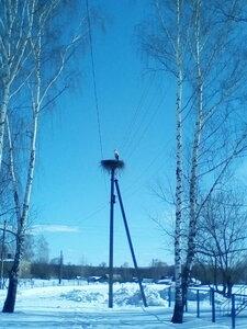 27 марта 2018 г. Прилетели аисты, а у нас ещё зима!