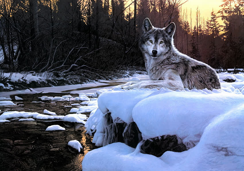 волчица зимой картинки штатном
