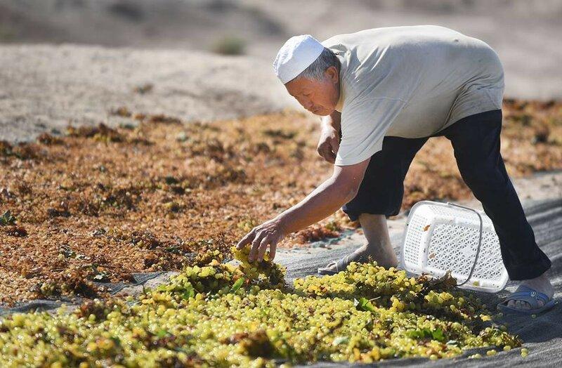 0 20e665 b31cc XL Турфанская долина виноградников в китайском оазисе посреди пустыни