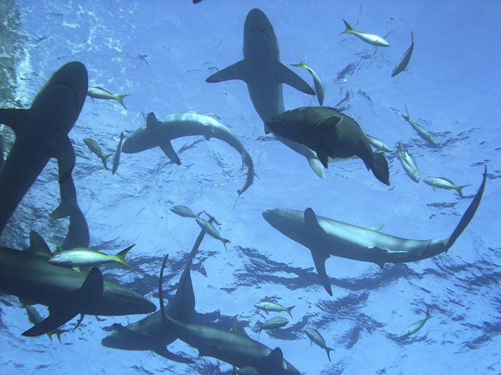 Как поймать акулу за хвост? (18 фото)