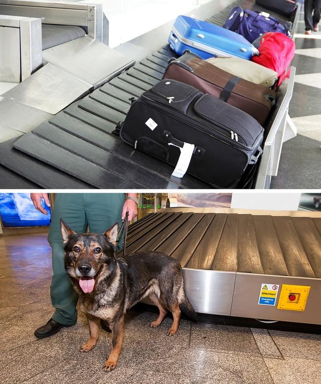 интересные факты аэропорты аэропорт сотрудники голый тайна как устроено интересное