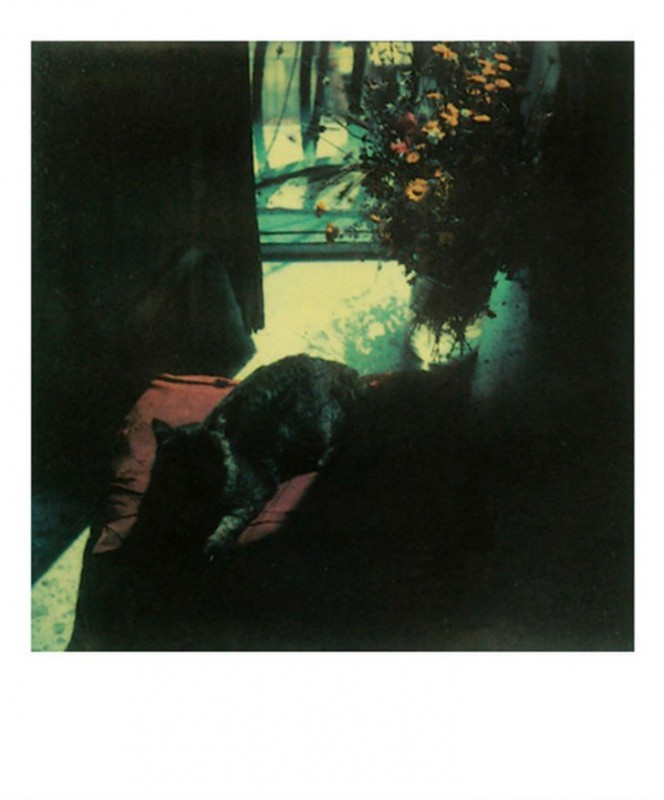 Неизвестные полароидные снимки Андрея Тарковского из личного архива