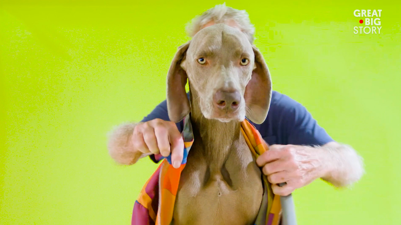 behind the scenes dogs Videos Portrait video portraits campaign anthropomorphic