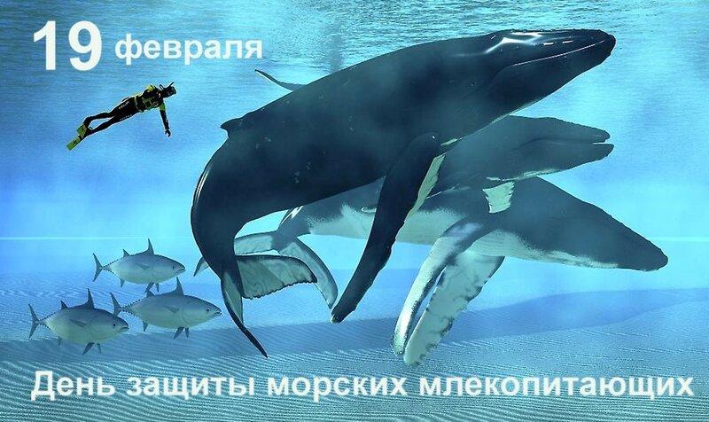 19 февраля - Всемирный день защиты морских млекопитающих и не только...