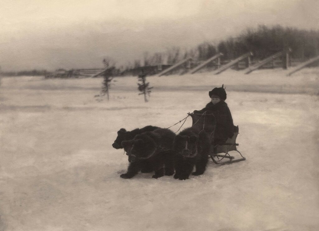 Архангельск. Медвежья упряжка