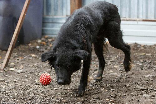 Граф собака из приюта в москве догпорт фото