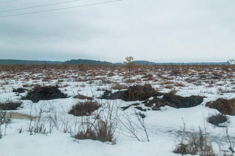 Болото, Вологодская область