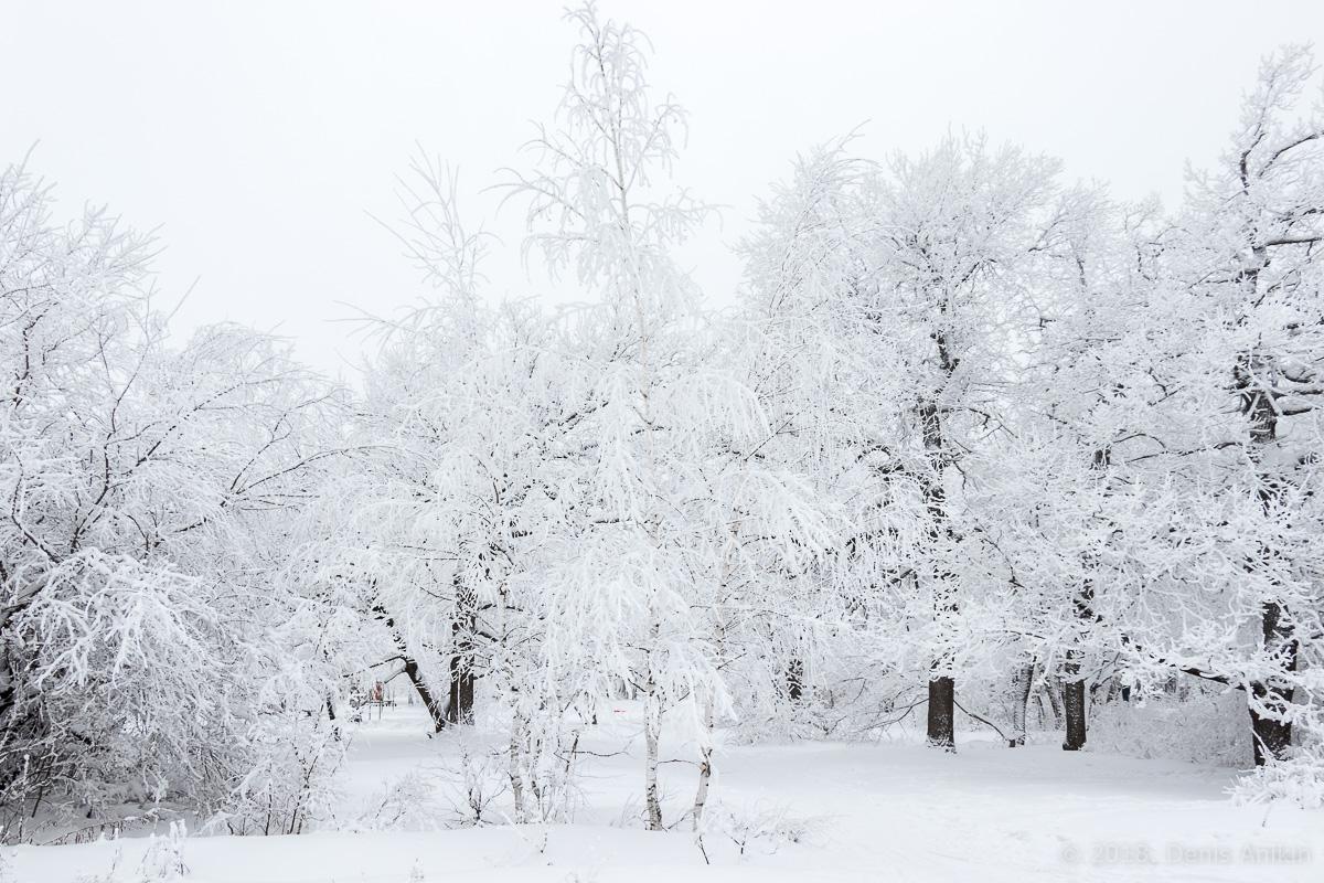 зима лес кумысная поляна фото 3