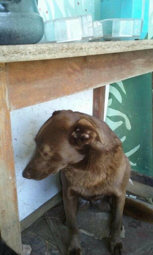 Эта собака потерялась 2 года назад. За это время она забыла внешность хозяина, но не его запах