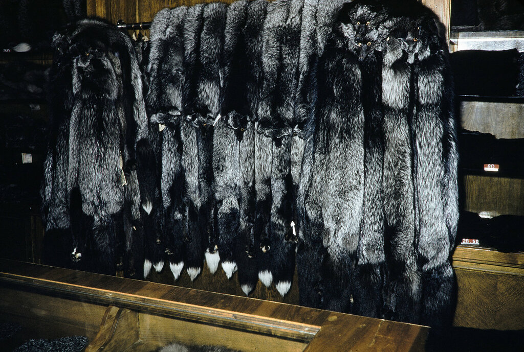 Russia, fur coats for sale at store in Moscow