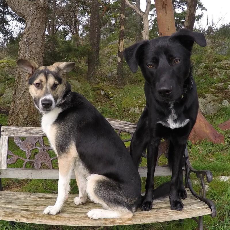 Олимпиада 2018 Олимпийские игры собаки спасение спортсмен Южная Корея