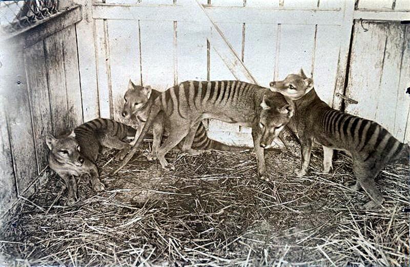 10 видов животных, которых истребил человек (10 фото)