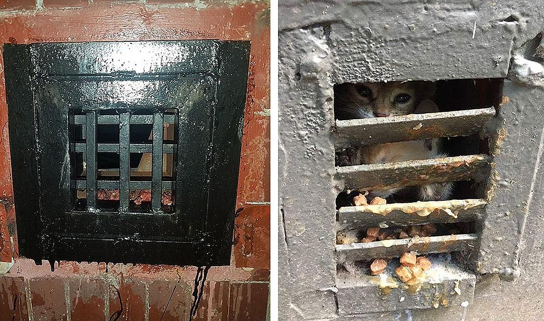 Все для котиков: Минстрой РФ запретил замуровывать подвалы (2 фото)