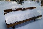Снежная куница