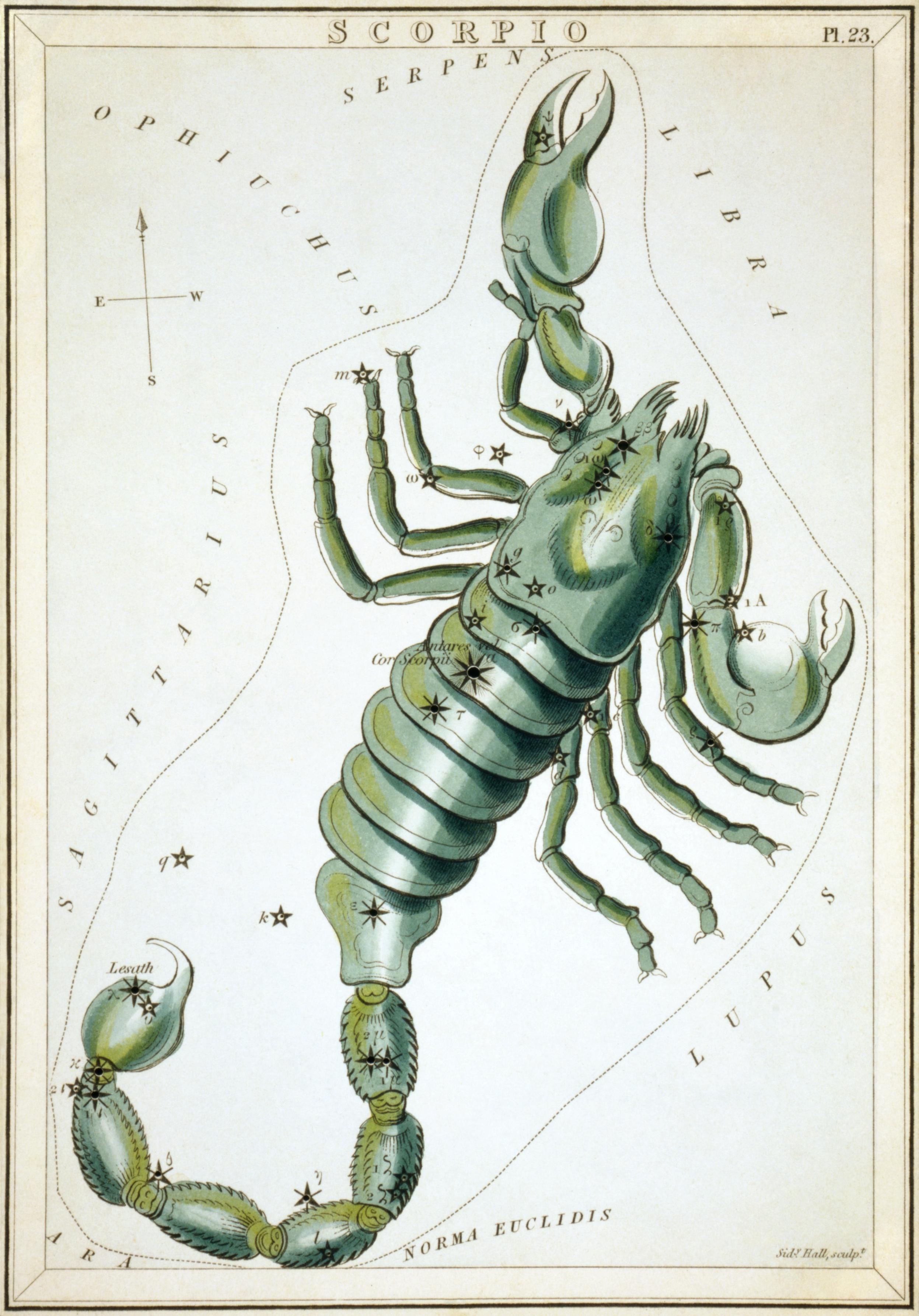Карточка №23: Скорпион