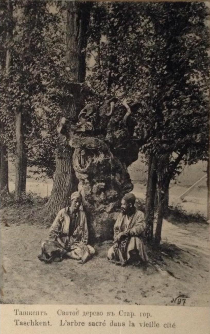 Священный пень на кладбище в старом городе