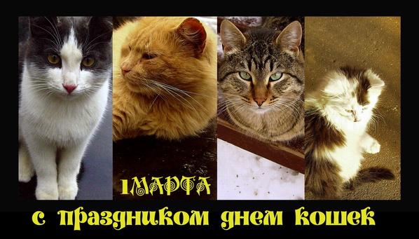 1 марта с днем кошек