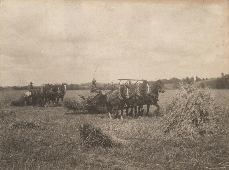 Binding grain, 1911