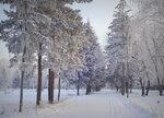 В зимний лес...