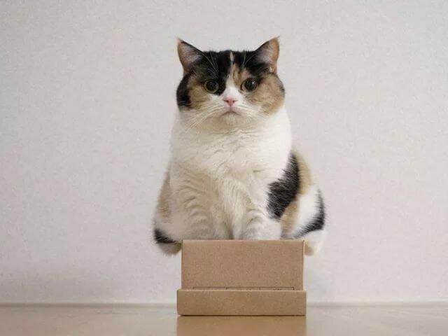 0 17f01f 996450fa XL - Домик для котика