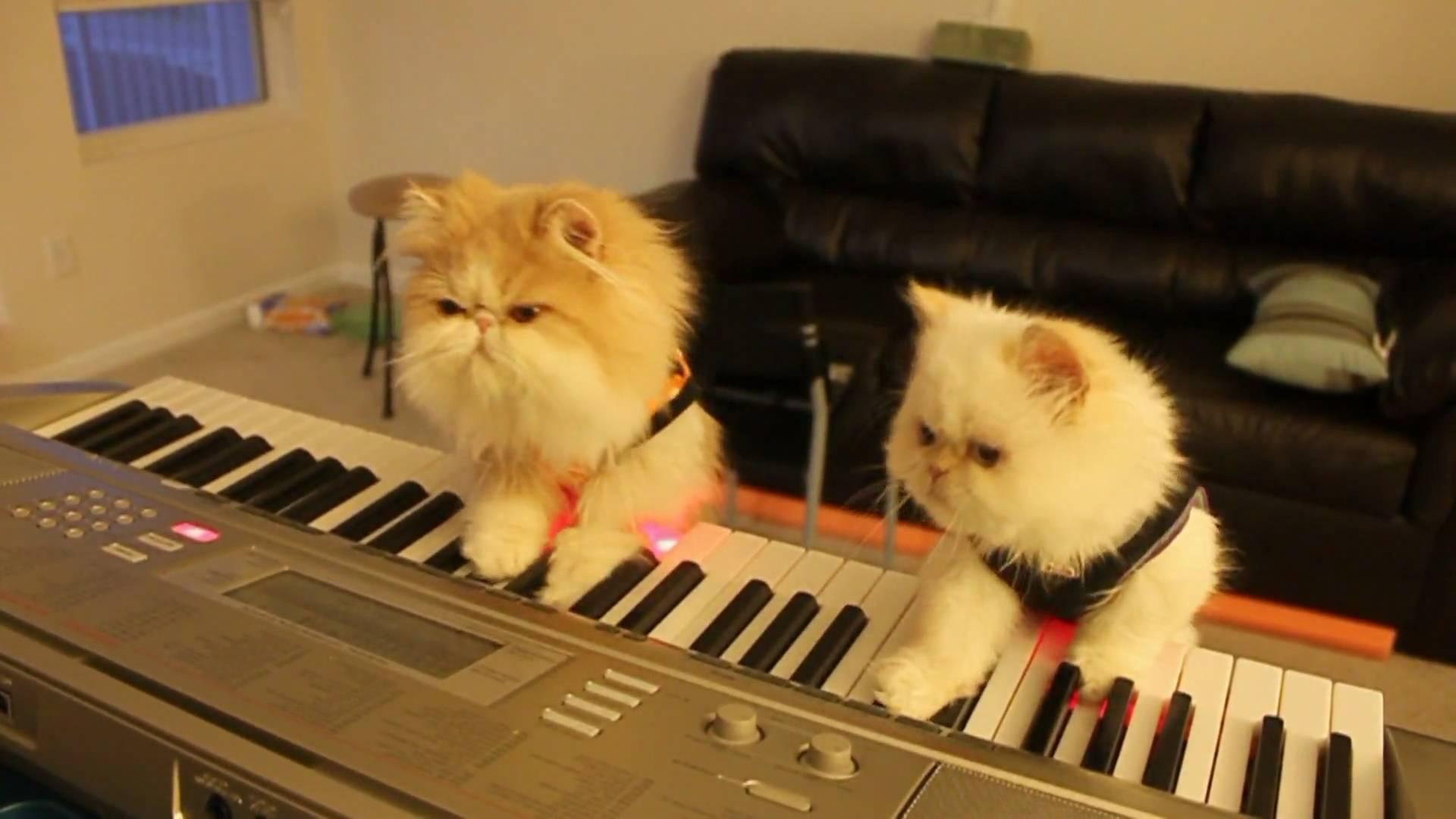 две кошки в доме как подружить фото