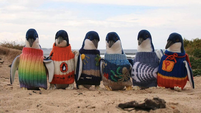 A Man Knits Sweaters to Protect Oil Covered Penguins (8 pics)