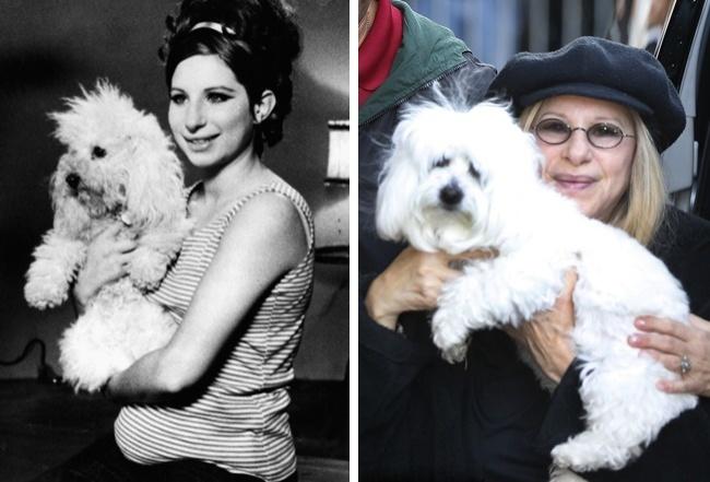 собаки известных людей собаки людей известные люди знаменитости АТО что делать люди странное