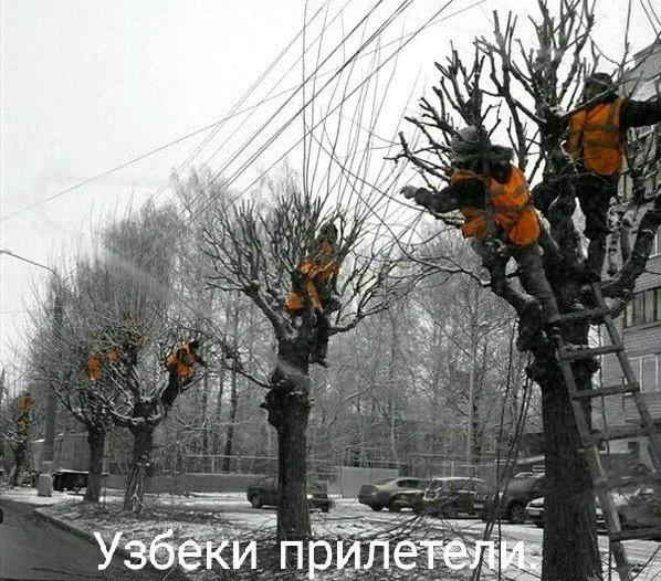 Узбеки прилетели