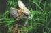 serval_kitten.png