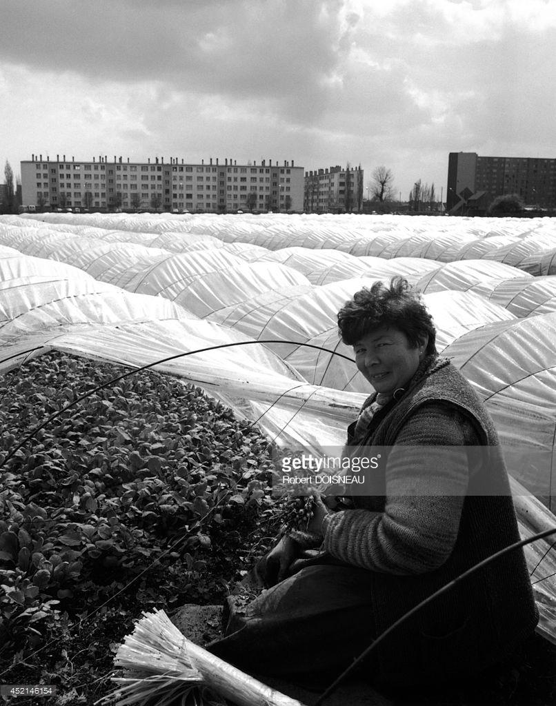 1986. Портрет миссис Парро, садовницы с проспекта Сталинграда, 9 в Сен-Дени