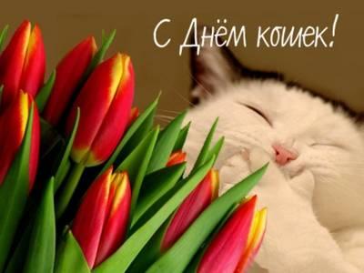 Картинка С днем кошек! Коша и тюльпаны открытки фото рисунки картинки поздравления