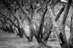Фото Денис Завалишин. Монокль 85 мм