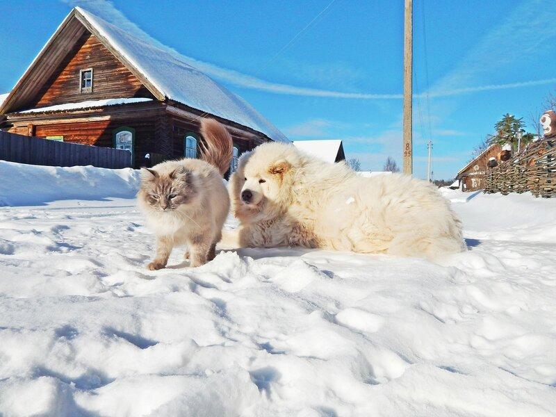 Мороз и солнце. День чудесный!