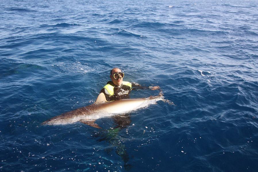 акулы познавательно страшные места Национальный парк национальные парки подводный мир самый большой