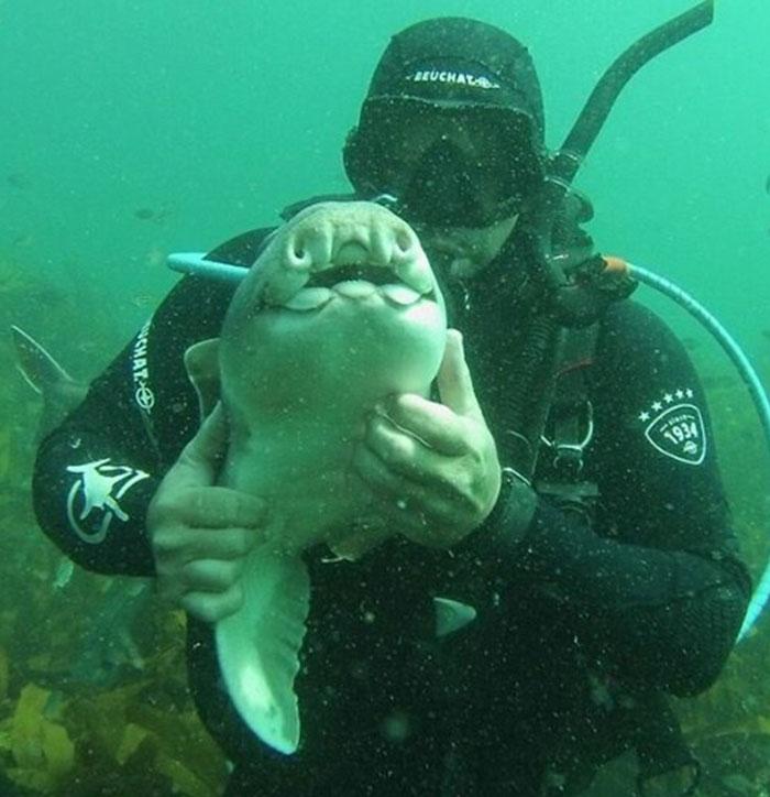 Дайвер приласкал акулу, и теперь она приплывает к нему в руки снова и снова
