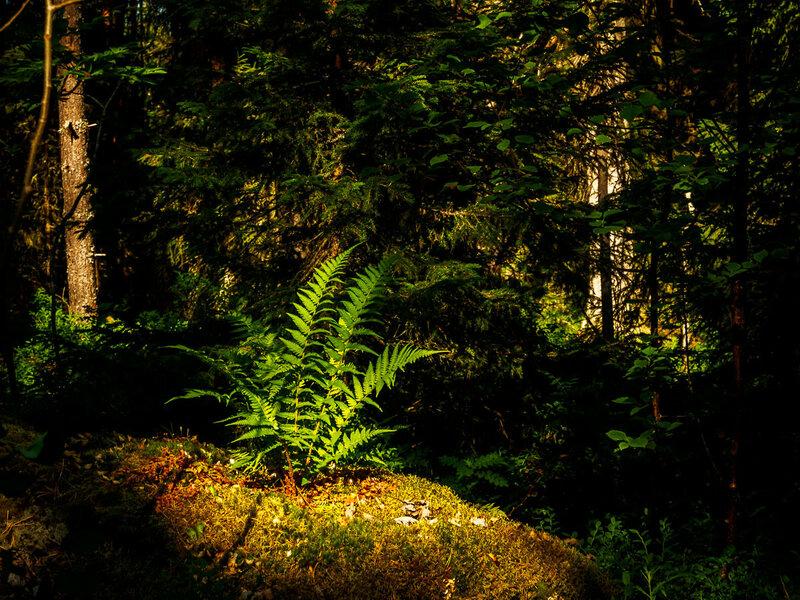 Леса тоже безупречны.