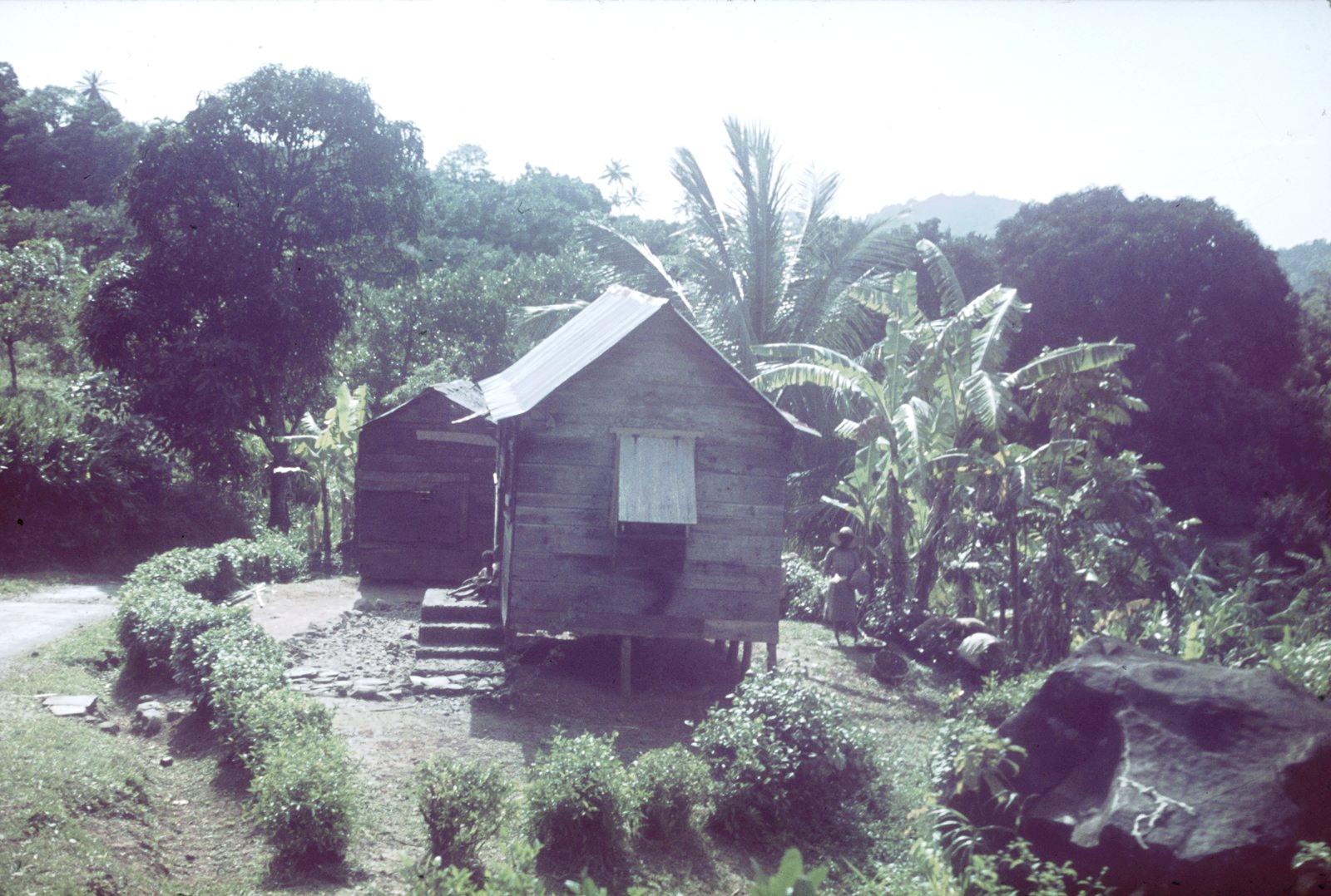 Гаити. Хижина с жителями перед пальмами