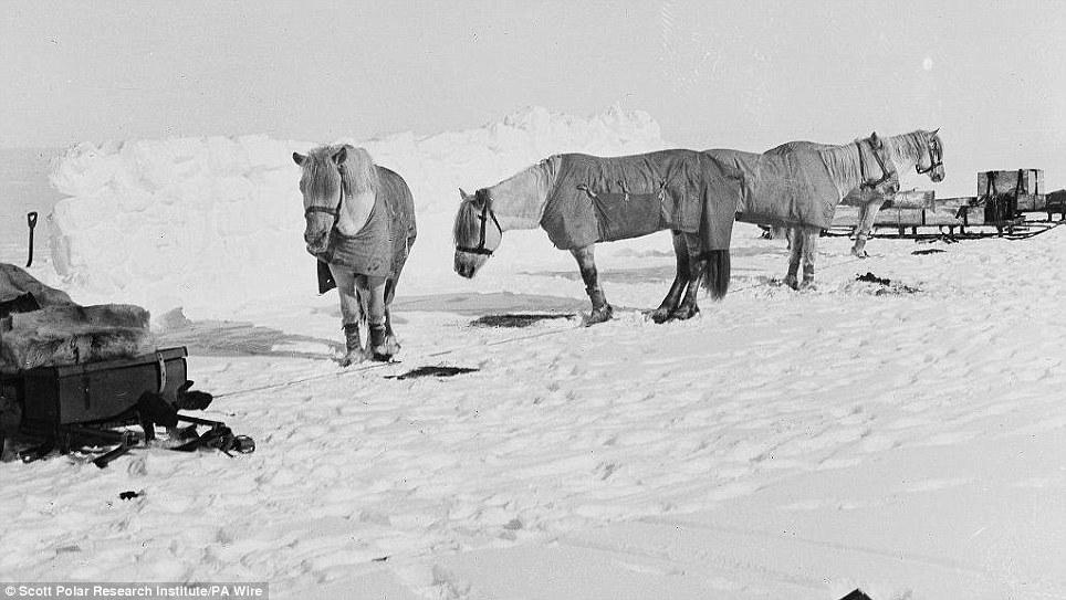 Трагическая экспедиция Роберта Скотта на Южный полюс.