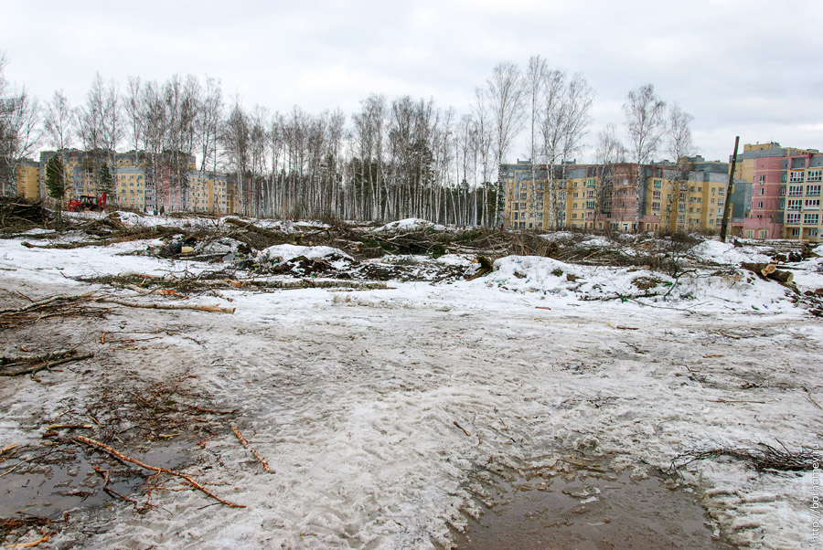 вырубили деревья