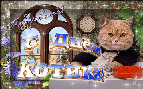 С днем котика! Поздравляем