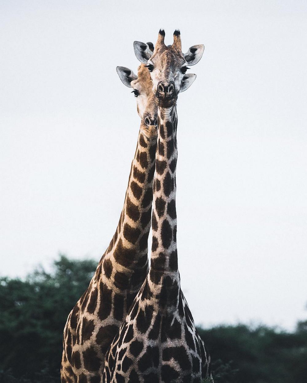 Дикая природа и животные на снимках Донала Бойда