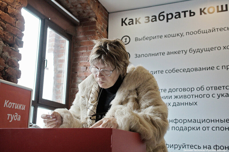 Всем по котику. Кр.Октябрь. 01.04.18.16..jpg
