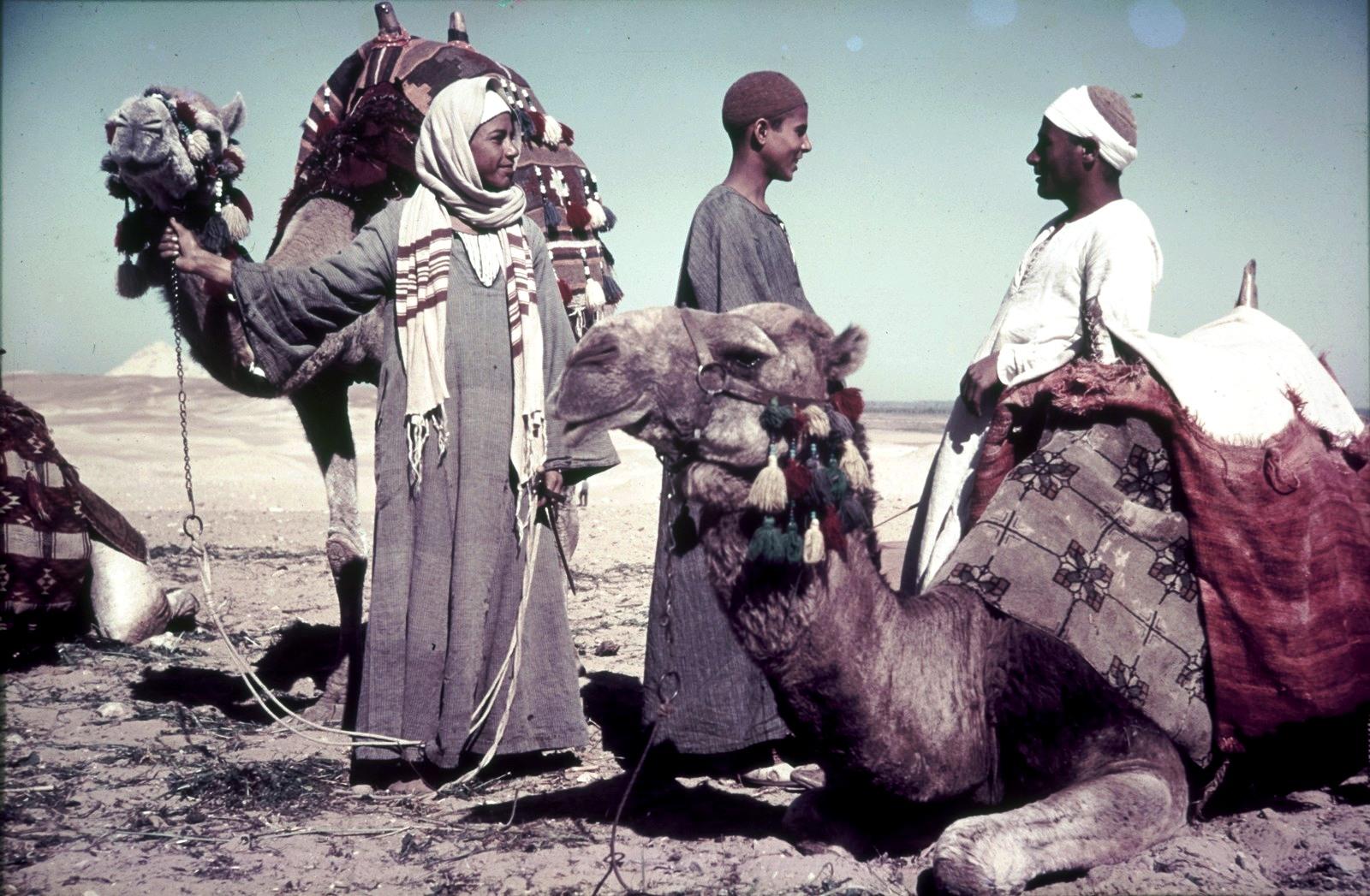 Верблюды с погонщиками в пустыне