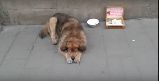 Лицензия от Садового? Возле львовской ратуши бездомный пес собирает деньги с иностранных туристов (видео)