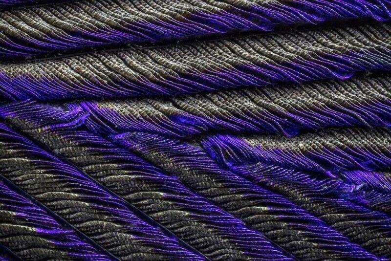 Фото: как выглядят перья павлина под микроскопом
