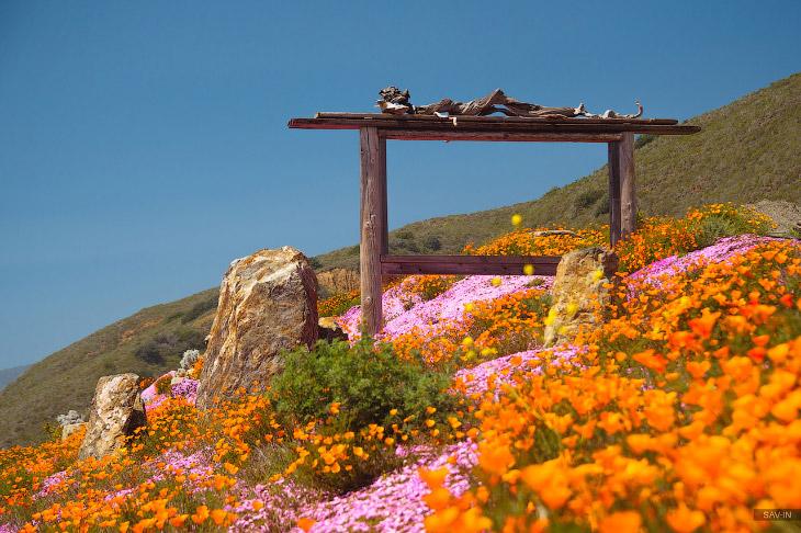 Санта-Барбара и цветущее побережье Калифорнии (40 фото)